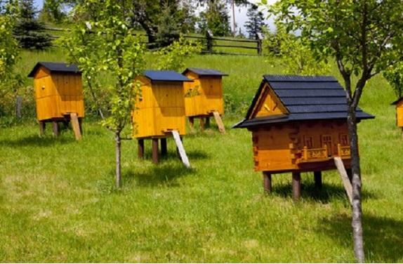 Beehives in garden.
